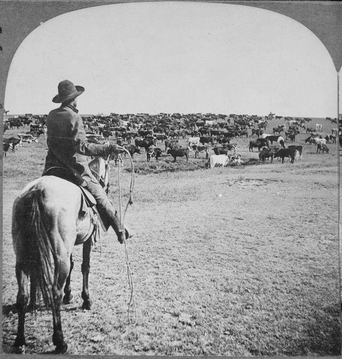 cowboy-roundup.jpg