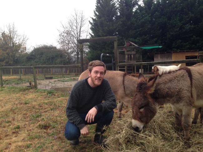 donkey simon.jpg