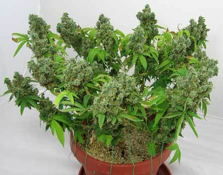 flowering-plant-training-sm.jpg