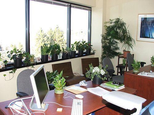 Buy Office Plants Online.jpg