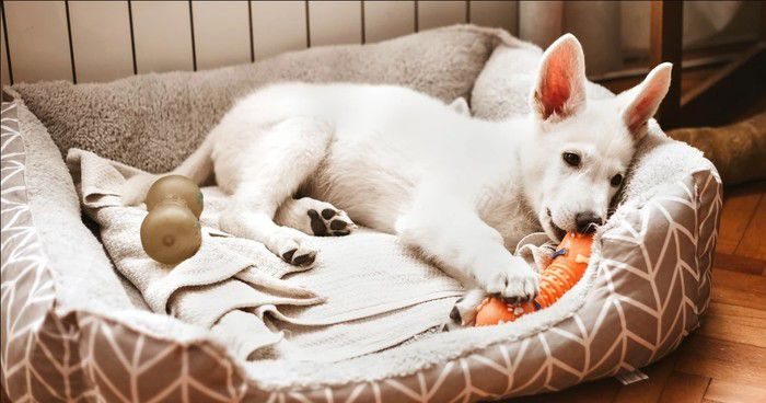 Buying the Perfect Dog Bed.jpg