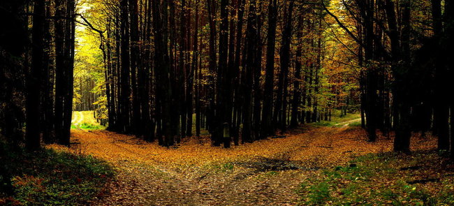 two-roads-in-a-yellow-wood.jpg