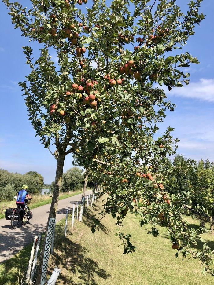 appels-betuwe.jpg
