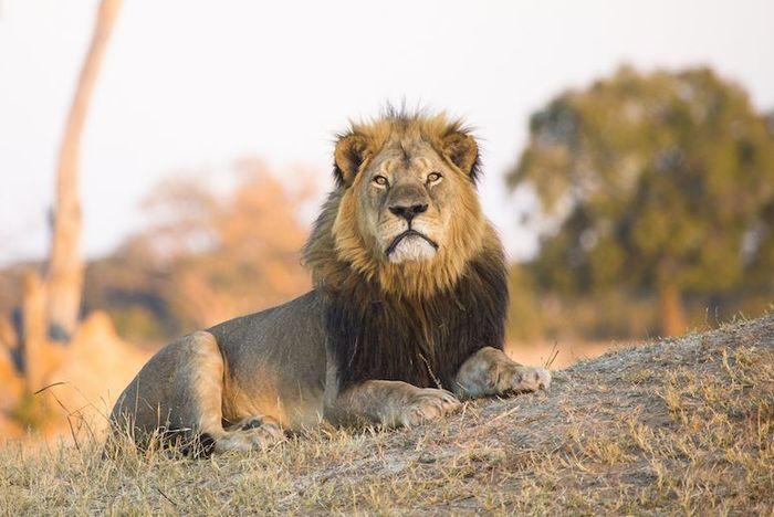 cecil the lion.jpg